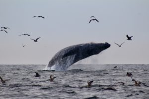 "© Little Ones Music/Birdsong and the Eco-Wonders Listen to our ""Humpback Whale Song"""